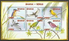 Ghana Oiseaux Martin Pecheur Guepier Kingfisher Birds Eisvogel Vogel ** 2002
