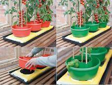 GARDEN TOMATOES TOMATO BEAN PLANT HALO HALOS GROW BAG WATERING POT PLANT GROW