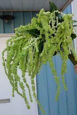 """New Lot of 18 stalks of 48"""" Amaranthus/ green & white/ silk leaves"""