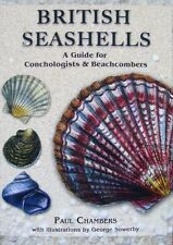 LIVRE/GUIDE : COQUILLE ANGLAIS (coquillage britannique,british seashells,shell)