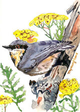 ACEO Limited Edition-Tansy and nuthatch, Bird art print, Gift for her