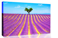 Lonely Tree in Purple Lavender Field Canvas Wall Art Picture Print