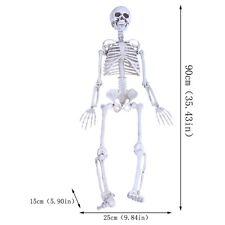 90CM Life Human Anatomical  Skeleton Medical Model Teaching School