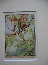 Cecily Mary Barker THE BEECH TREE FAIRY Mounted Vintage Print 1940s