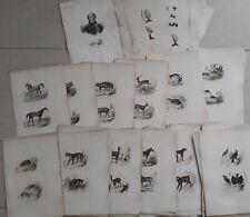 Buffon 1835 dessins Adam 155 planches coloriées animaux
