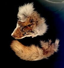 Tanned Coyote Face and Tail - Lot - Craft Fur - Animal Hide - Taxidermy