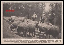 Document  POILUS EN BERGER TROUPEAU  MOUTONS  MILITARIA WWI GUERRE 14-18 - 1915