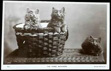 "OLD POSTCARD OF CATS / KITTENS ""THE THREE WATCHERS"""