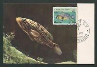 ITALIA MK 1978 FAUNA FISCHE FISH BARSCH MAXIMUMKARTE MAXIMUM CARD MC CM d5512