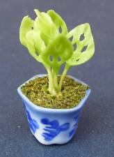 Échelle 1:12 fromage plante dans un pot en Céramique Maison De Poupées Fleur Jardin Accessoire P1