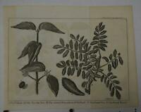 Antique Original Copper Plate Engraving Trees Botany Printed 1740's