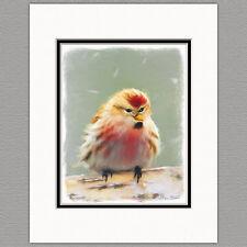 Common Redpoll Wild Bird Original Art Print 8x10 Matted to 11x14