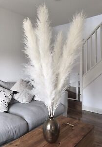 Pampas grass 5 large 110cm tall white stems with 75cm dry flower real Boho,bunch