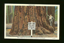Giant Tree - Bull Creek Flat on the Redwood Highway of California -One Cent Box