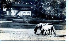 CP Allemagne Deutchland - Tierpark Hirschfeld (Kr. Zwickau) - Ponnywiese