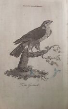 The Goshawk, Antique Bird Print 1804, Rare