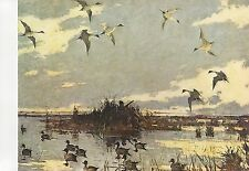 """1972 Vintage HUNTING """"PINTAILS DECOYED, 1921"""" by BENSON, DUCK HUNTER Lithograph"""