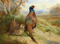 Dream-art Oil painting Archibald Thorburn nice birds in autumn landscape canvas