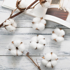 6pcs Natural Dried Cotton Head Silk Artificial Flowers Home Wedding Decorations