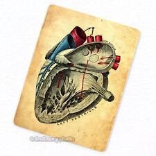 Heart #3 Deco Magnet, Decorative Fridge Antique Medical Illustration Anatomy