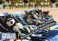 6 Photos Cinéma 20x28.5cm (2002) CHIENS DES NEIGES - Snow Dogs, Disney NEUVE
