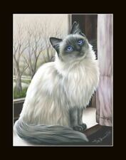 Ragdoll Cat Stay Inside Print by I Garmashova