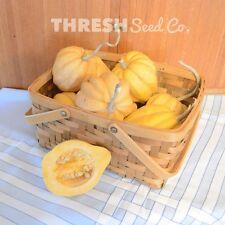 Winter Squash - Thelma Sanders - 25 Seeds + Free Gift
