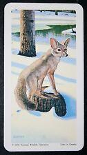 Kit Fox North American Mammal Illustrated Card Vgc