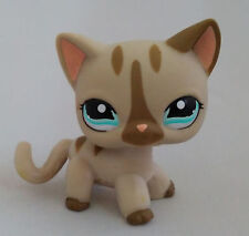 Gray Short hair Cat Blue Eyes Kids Toys  Littlest Pet Shop LPS338