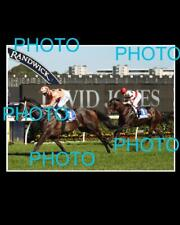 BLACK CAVIAR LARGE HORSE RACING ACTION PHOTO 3