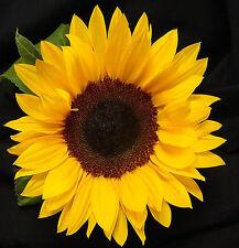 Flower Seed - SUNFLOWER - Japnese Variety Miniature Yellow - Pack of 30 Seeds
