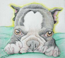 Boston Terrier Pet Dog Art Original 5 x 6 Pencil Painting Drawing-Carla Smale