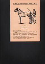 SULKY HARNESS, Trotting HORSE, catalog page, vintage, original 1938