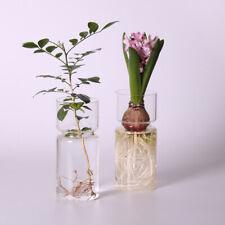 Hyacinth Glass Vase Flower Planter Pot DIY Terrarium Container Decor