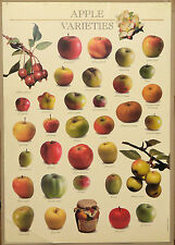 (PRL) 2000 MELA APPLE MELE POMMES VINTAGE AFFICHE PRINT ART POSTER COLLECTION