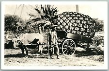 HONOLULU HAWAII EXAGGERATED PINEAPPLES ANTIQUE REAL PHOTO POSTCARD RPPC