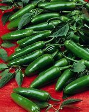 Vegetable - Pepper (Chilli) - Serrano - 50 Seeds - Economy