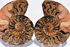"2241x Cut Split PAIR Ammonite Deep Crystal Cavity 110myo Fossil 211mm XXXXL 8.3"""