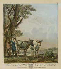 Nach Karel DUJARDIN, Der Hirte mit seinen Rindern in der Landschaft, Kol. Rad.