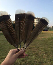 Wholesale 10-100pcs precious wild turkey tail Feathers 6-12inches / 15-30cm NEW