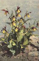 """carte fantaisie - Plante """"SABOT DE VENUS"""""""