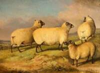 LMOP1332 100%  hand painted Sheeps on the mountain oil painting art on canvas