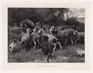 """FRAMED 1800s Ernst Adolf MEISSNER Antique Print """"Frightened Sheep"""" SIGNED COA"""