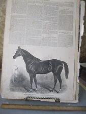 Vintage HORSE Print,RACE HORSE BOURBON,Harpers,1860