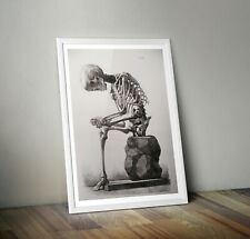 Anatomical Repro Print by Francesco Bertinatti 19th Century Natural History A3