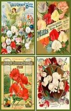 Olde American Antiques Quilt Blocks - Flower Set 4 Sweet Peas - FREE US SHIPPING