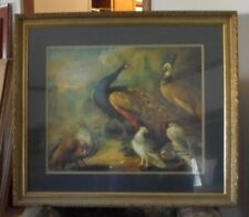 "Wooden Framed and Matted Art Print of Peafowl with Pigeons 38"" x 33"""
