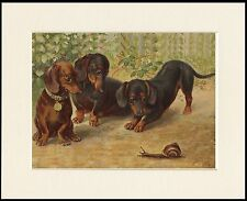 DACHSHUND DOGS WATCHING SNAIL CHARMING DOG PRINT MOUNTED READY TO FRAME