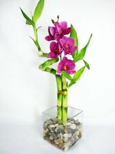 Live Spiral 3 Style Lucky Bamboo Plant w/ Silk Orchid & Glass Vase Decor Gift