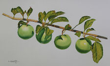 Green Apple 3, Fruit, Original Watercolor Painting, Signed, Art